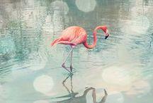 Birds / by Maria Chaplygina