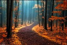 Paths / by Fabricio Longo
