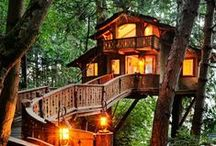 ⛺ Tree Houses ⛺ / by H Stanbery