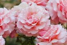 Flowers / by Essence 7