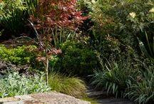 Garden landscape / by Deb Dawes