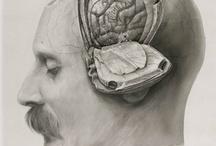 anatomy / by annie tanalski