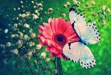 My Vitual Garden / Flowers, Gardens, Butterflies, Hummingbirds, Landscaping  / by Eileen Harris