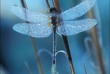 dragonflies / by Dianne