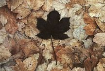 fall / by Dianne