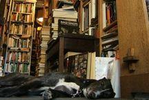 the Magic Bookstore / the bookshop in my head / by Jessica Schrock