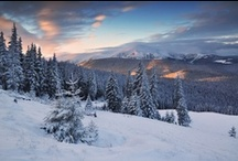 Winter Wonderland / by Barb Pullin