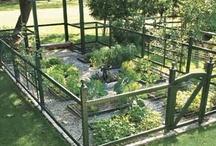 Gardening ideas / by Deborah Christen