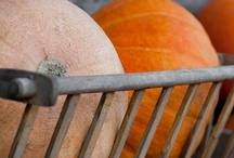 Pumpkin Thyme / Autumn / by Yolanda Iding
