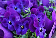 Gardens/Flowers / by Yolanda Iding