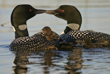 Loons,OWLS  and Eagles / by Yolanda Iding