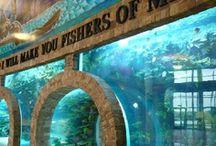 Awesome Aquariums & Fish Tanks / by Debra Hopkins