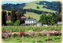 Sonoma Valley is Nearby / by Churchill Manor