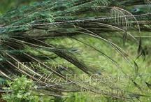 Favorite Wildlife / by Kay Harrington Prints