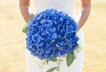 Wedding / by Caitlin McAvoy