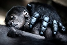 i love animals / by Angela Stewart