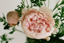 pretty things / beautiful images just for fun / by Whitney Beswick