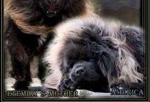 Doggie / Amitābha / by Tiffy Nella Oof
