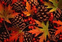 Autumn Photos / by Donna Kriskovich