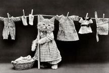 Historical Cat Pictures / Cat pictures are what the Internet is for! / by Stuff You Missed in History Class