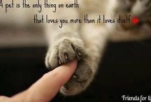 It's A Pet's World / Genuine Pet Meds @ Discount Prices! www.Pet-Rx-Meds.com / by Pet-i-Meds