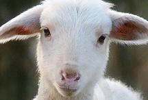 Lamb Creations / by Barbara Alfonso