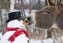 ~*~Snowman Love~*~ / by Connie Cochran