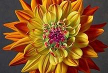 Fabulous Flowers... / by Amanda