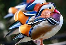 Birds-Water Birds / by Jean DeSavage