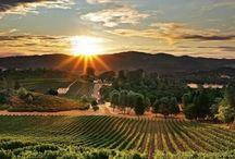 Explore Wine Country / by Trinitas Cellars