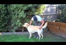 Watch FURminator Work! / We LOVE when FURminator users take video of deShedding sessions with their pets! Here are some of our favorite user-created videos showing the FURminator deShedding Tool in action! / by FURminator®