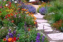 Inspiration / Images and DIY ideas that inspire us. / by FoxFarm Soil & Fertilizer Company