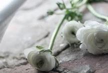 ° Petites fleurs ° / by Valérie André