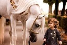 Horses / by Marcky