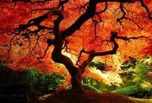 Landscape Inspiration / by Amy Turner