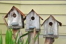 birds, birdhouses & tutorial / by Milva Consolati
