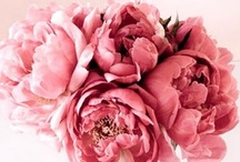 Pink-a-licious / by Killian Walker