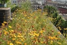 Green Roofs for Biodiversity / by Kelly Brenner