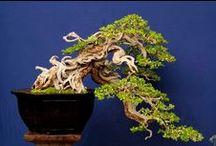 Bonsai & Ikebana / by Lina Rapisarda