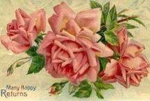 Rose / by Daphne Hsu