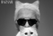 chic cats / by miss sophie