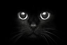 Cats & Kittens / by Tiffany Rose Princess