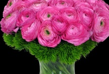 Flowers: Ranuculus / by Anntoinette McFadden