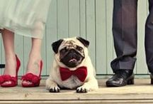 Bridal Party: Pets / Planning to put your pet in the #wedding? Here are some fun ideas to include your dog, cat, or whatever type of pet you have! / by Wedding Favors Unlimited