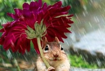Flowers / by Dianne Hendricks