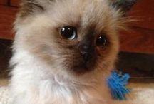 cute little pets! / by Megan Culbert