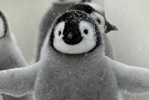 Penguins / by Brandi Pawlowski