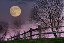 Into the Night / by Diane Miller
