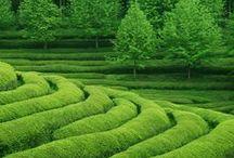 World of Tea / by Rivertea