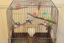 Birds & Cages! / by DIY SHABBY CHIC
